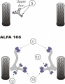 Silentbloky Powerflex Alfa Romeo 166 Rear Stabiliser Arm Bush (12)